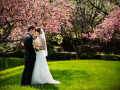 bride and groom standing among cherry trees
